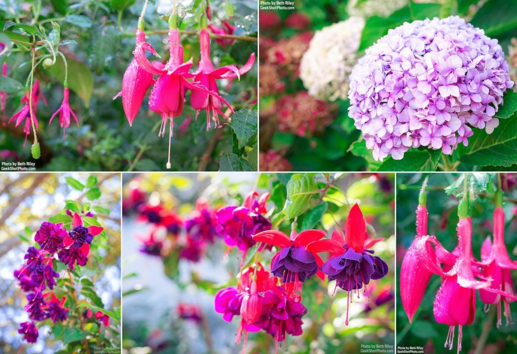 hearst-flowers